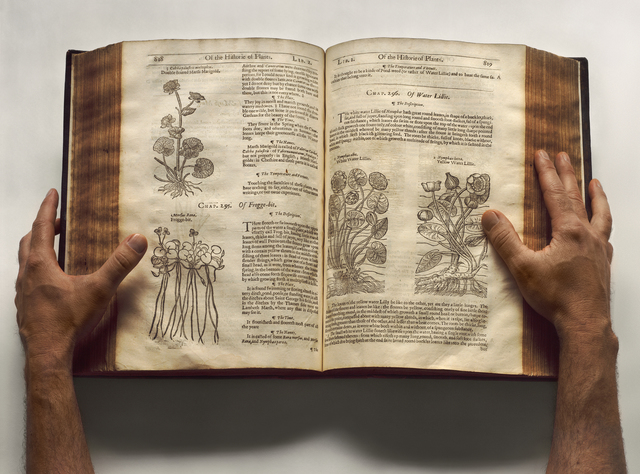 Esther Shalev-Gerz, 'The Open Page - The Herball, or generall historie of plantes', 2009, Wasserman Projects