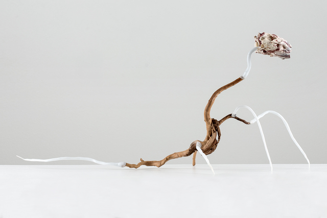 , 'Creature that is running to be beheaded and maybe even tailed,' 2018, Anna Nova Gallery