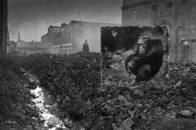 , 'Alleyway with Chimpanzee,' 2014, Edwynn Houk Gallery