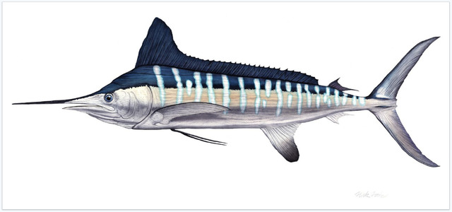 , 'White Marlin,' 2017, Quidley & Company