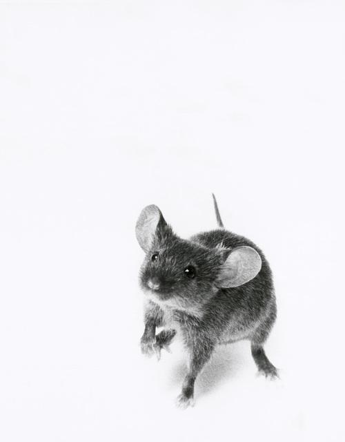, 'Mouse,' 2000, Galerie Peter Sillem