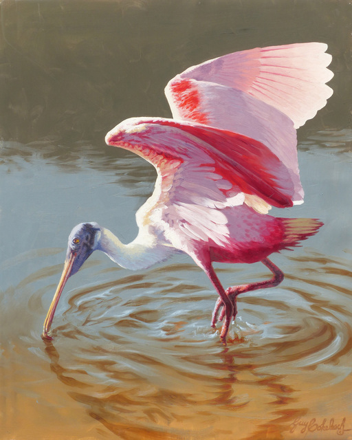 , 'Roseate Spoonbill in Breading Plumage,' 2017, Geoffrey C. Smith Galleries