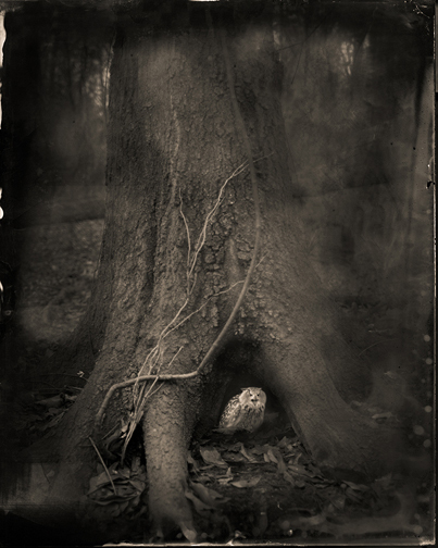 Keith Carter, 'Tree Roots', 2014, PDNB Gallery
