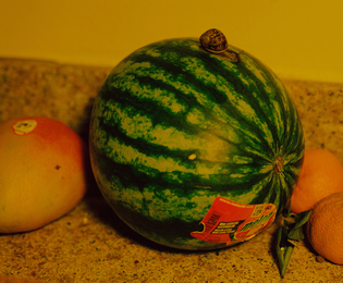 Snail and Melon
