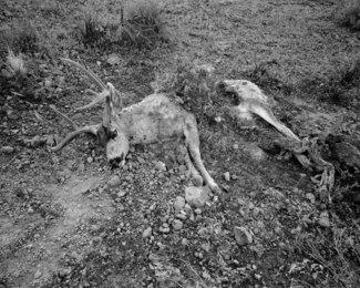 Lion's Kill