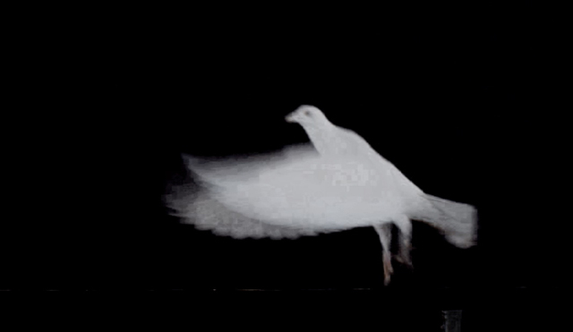 , 'White Doves,' 2016, Martin Asbæk Gallery