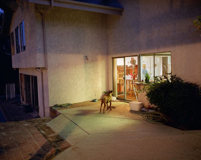 , 'Dog at Night,' 1999 printed 2013, Wirtz Art