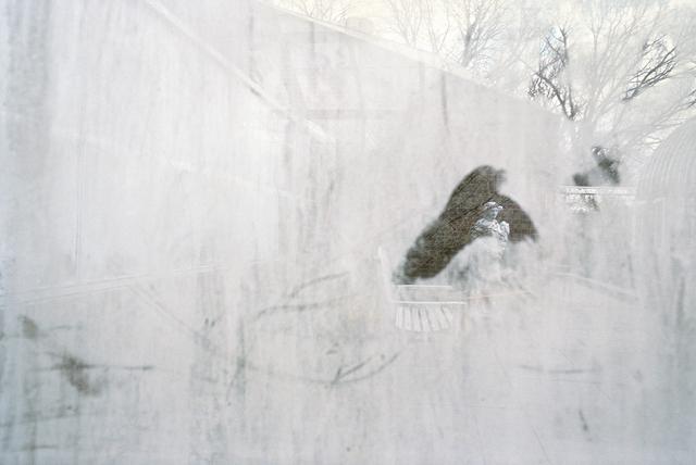 , 'Highland Park Conservatory, Rochester, New York,' 2013, Robert Klein Gallery