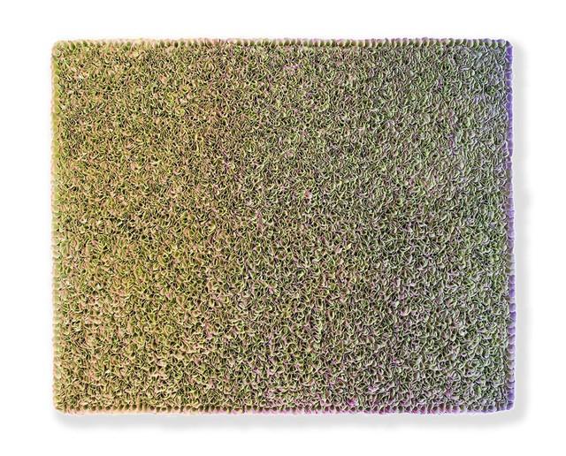 , 'Flowerbed 17-VII-005,' 2017, Absolute Art Gallery