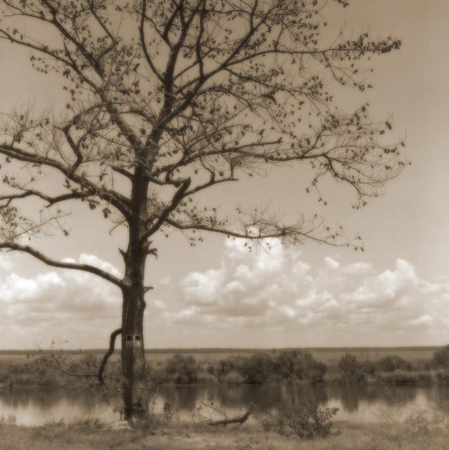 , 'Pinecone Tree,'  2000-2005, Paraphé