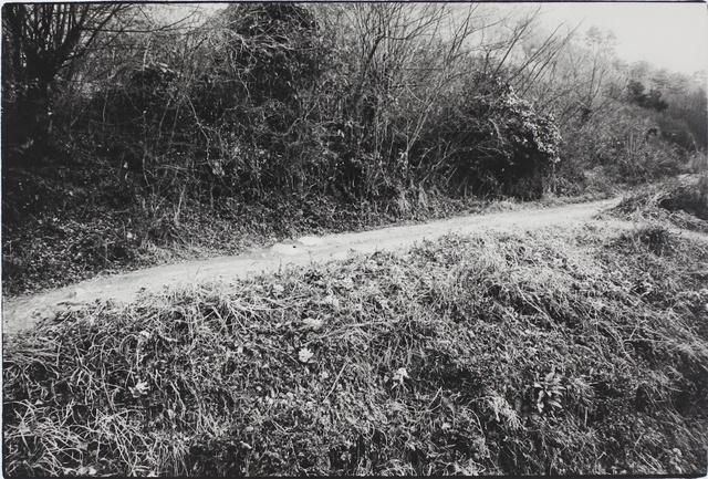 , 'Rural Path, Kume, Okayama (To the Villages series),' 1974, MIYAKO YOSHINAGA