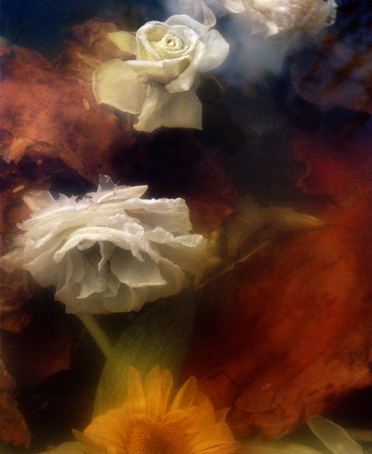 , 'Dark Matter #13, Sinking Rose and Sunflower,' 2017, Huxley-Parlour