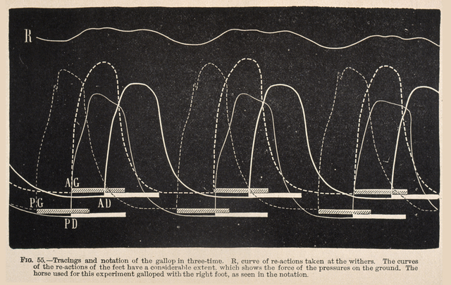 Étienne-Jules Marey, 'Fig. 55: Tracings and notation of the gallop in three-time ...', 1874, Getty Research Institute