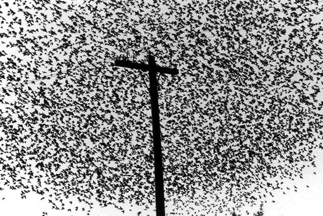 , 'Pájaros con poste, Guanajuato,' 1990, Etherton Gallery