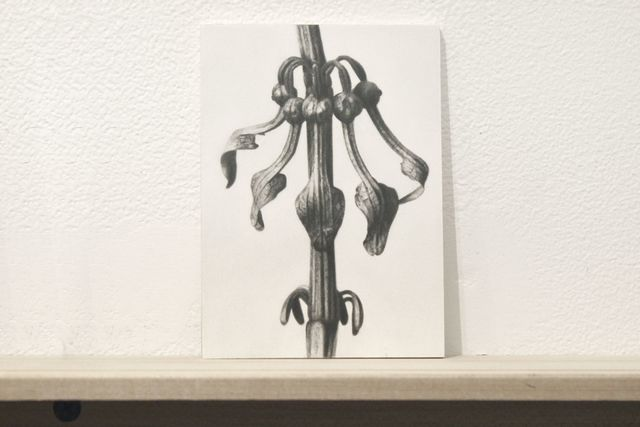 "Martí Cormand, 'Formalizing their concept: Sherrie Levine's ""After Karl Blossfeldt:17""', 2018, Josée Bienvenu"