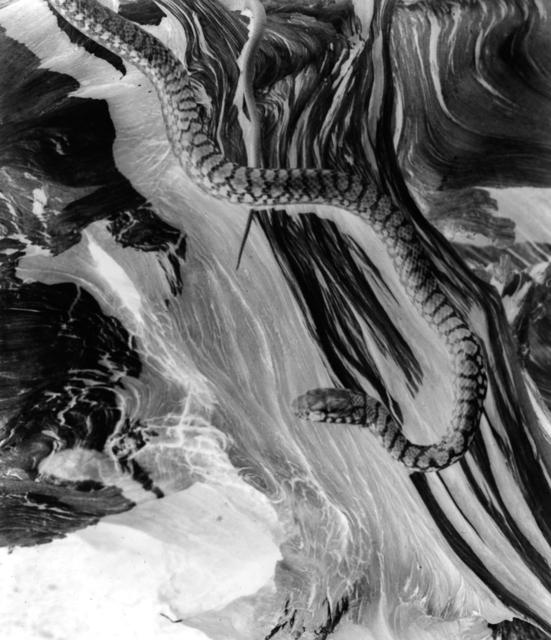, 'Snake (Negative), 1927,' 1990, Ryan Gallery