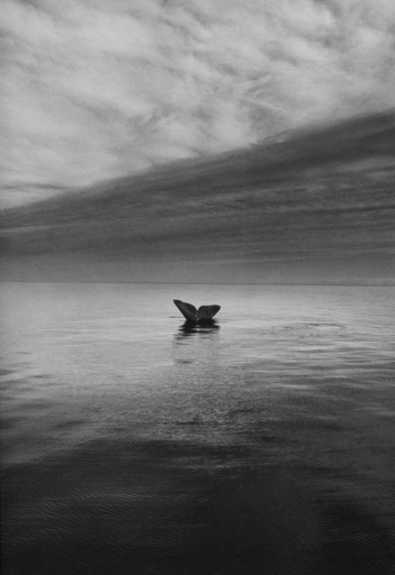, 'Whale Tail, Valdes Peninsula, Argentina,' 2004, Yancey Richardson Gallery