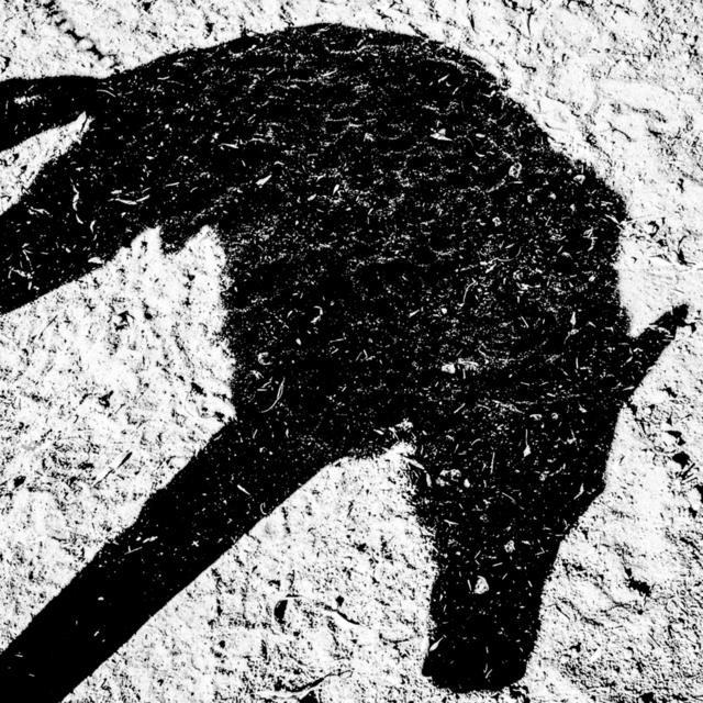 , 'Guard dog. Mendota, CA. ,' 2014, Anastasia Photo