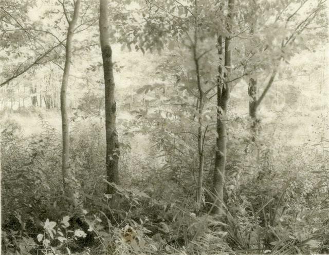 , 'Trees Beside Pond                                      ,' 1998, John Davis Gallery
