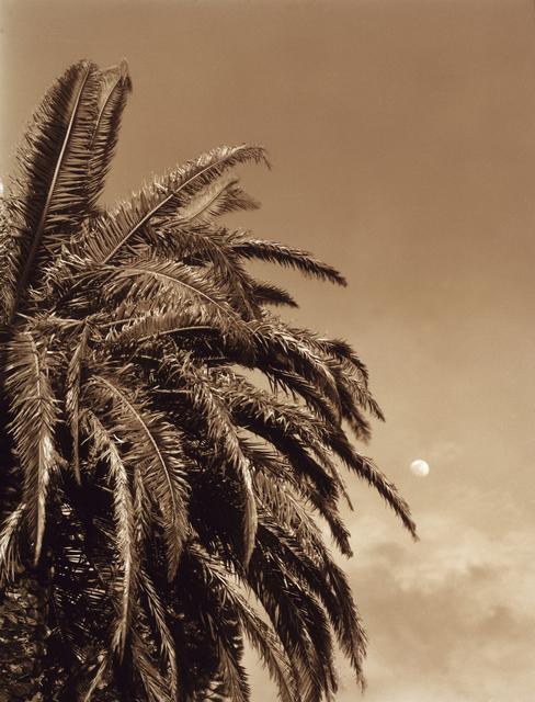 , 'Palm Leaves,' , Cavalier Galleries