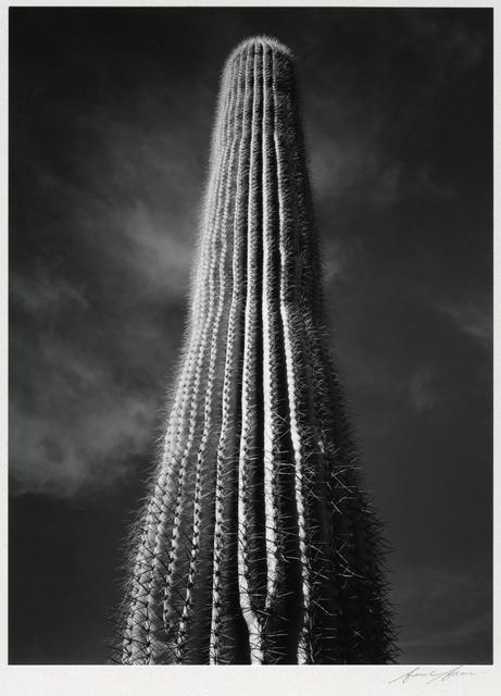 , 'Saguaro Cactus, Sunrise, Arizona,' 1946, Etherton Gallery