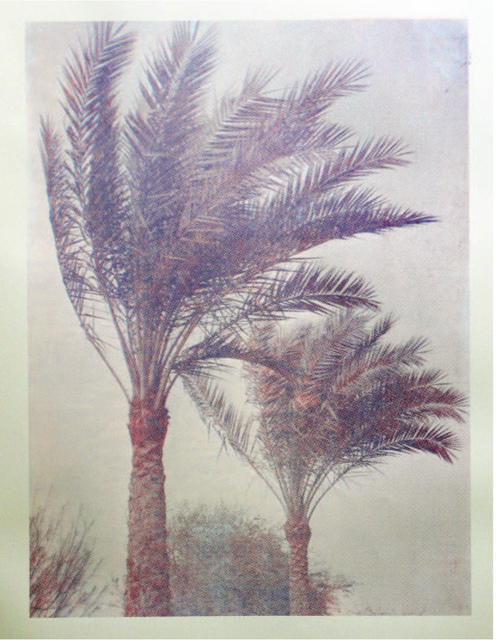 , 'Palm Trees of Iraq #4,' 2014, Konrad Fischer Galerie