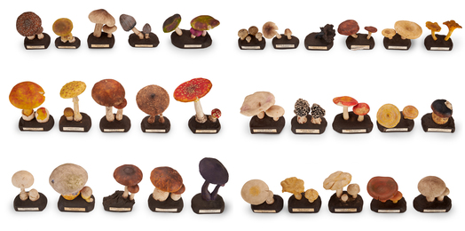 Didactic Collection of Rubber Mushrooms