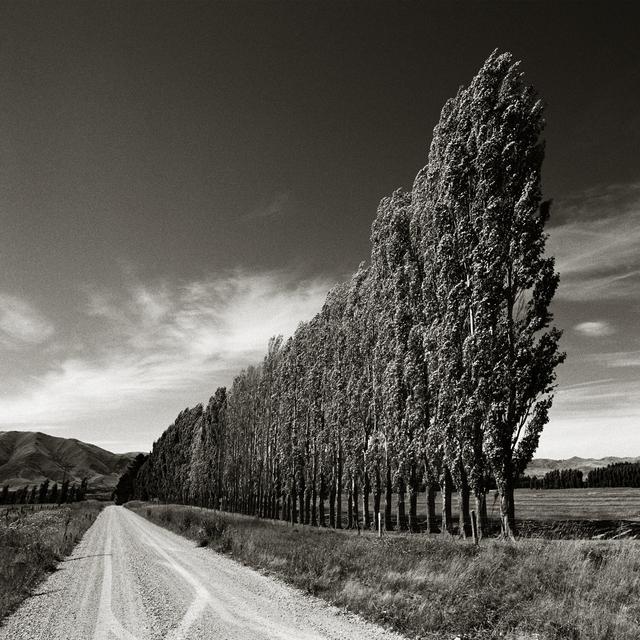 , 'Poplars, South Island, New Zealand,' 2003, Atlas Gallery