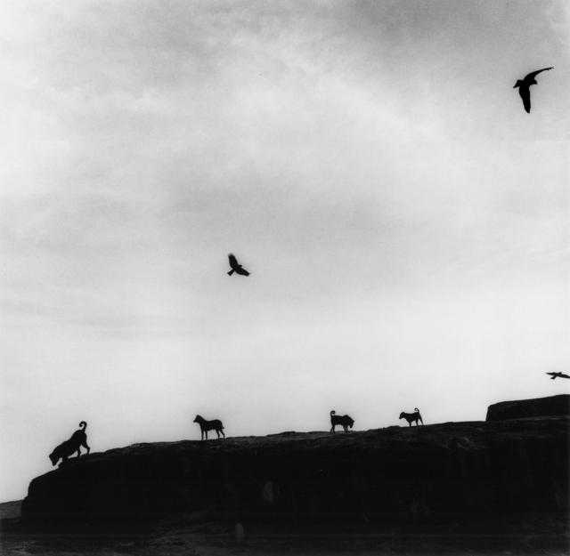 Graciela Iturbide, 'Perros Perdidos, India', 1997, Etherton Gallery