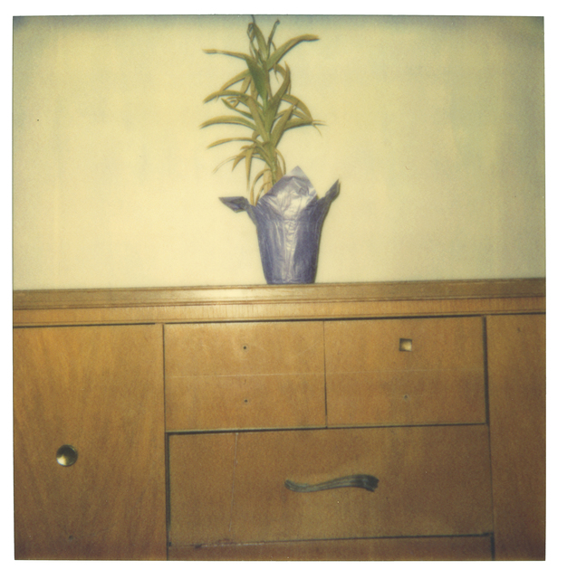 Stefanie Schneider, 'Lonely Plant on Cupboard', 1999, Photography, Digital C-Print based on a Polaroid, not mounted, Instantdreams