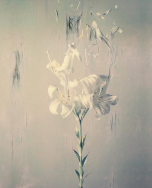 , 'Lilium Candidum 02P,' 2018, Yancey Richardson Gallery
