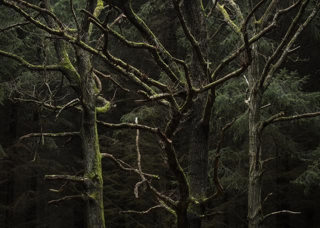 , 'Erindring / Memory,' 2018, Galleri Bo Bjerggaard