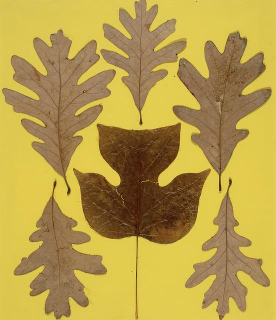 , 'Leaf Study IX,' ca. 1940, Hammer Museum