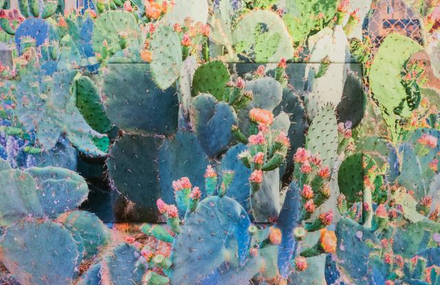 , 'Sub Rosa: Beauty/Pain,' 2017, Fort Worth Contemporary Arts