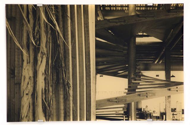 , 'Ladeira da Misericórdia, Liane,' 2016, Christopher Grimes Projects