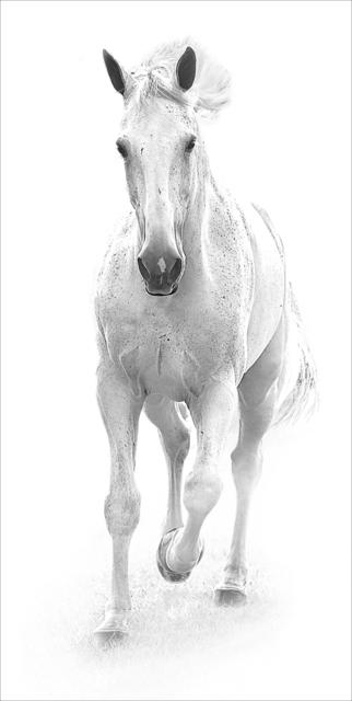 , 'White horse II,' 2017, Contempop Gallery