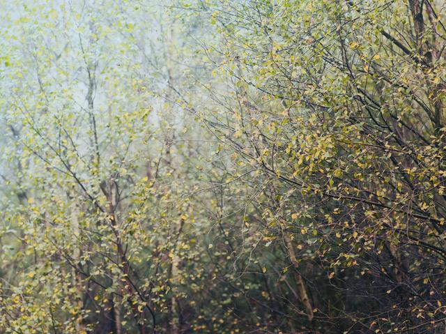 Leon Steele, 'Ranmore #7', 2018, Wren London