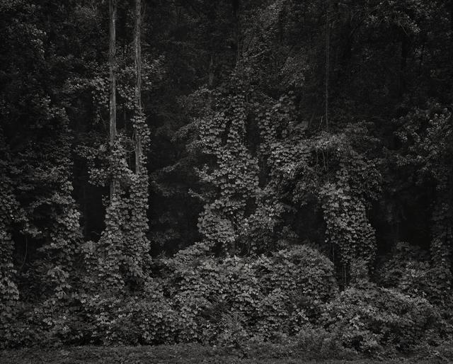 , 'Georgian Backyard,' 2012, Willas Contemporary