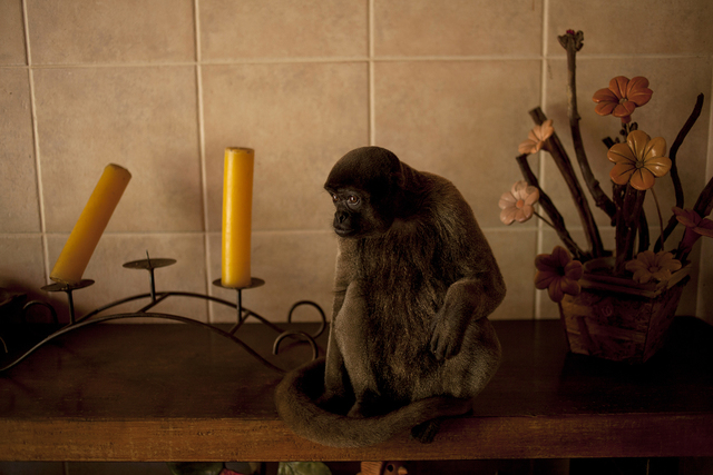 João Castilho, 'Macaco (from the series Zoo) - [Monkey],' 2014, Zipper Galeria