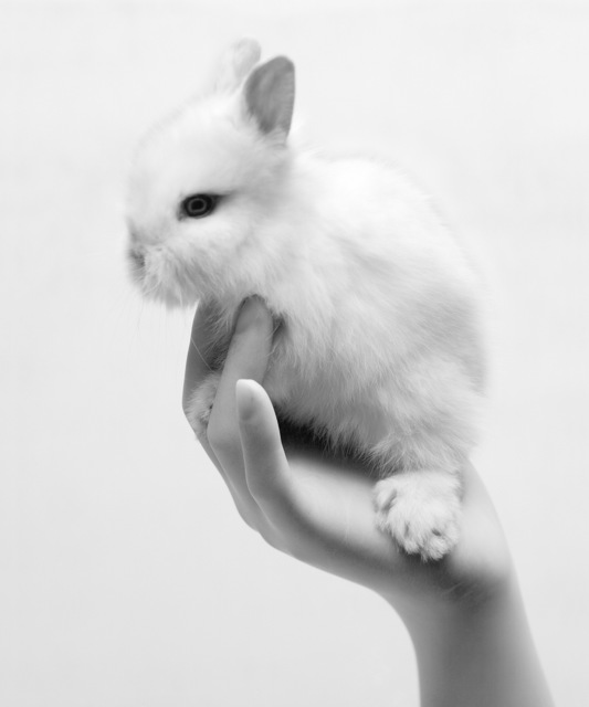 , 'Plastic syndrome - Rabbit,' 2018, Gallery BK