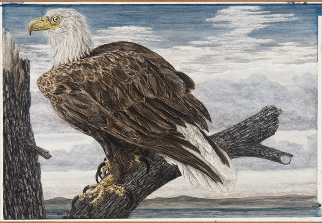 Janet Elizabeth Turner, 'Eagle', late 1970s-early 1980s, Valley House Gallery & Sculpture Garden