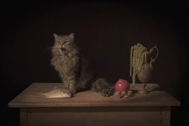 , 'The Feline,' 2017, Catherine Edelman Gallery