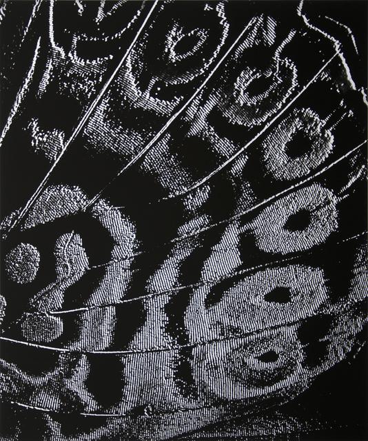 José Oiticica Filho, 'Abstração 3/57', 1957, Galeria Raquel Arnaud