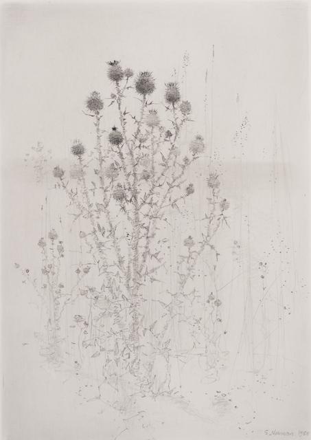 , 'Tistlar (Thistles),' , Pucker Gallery