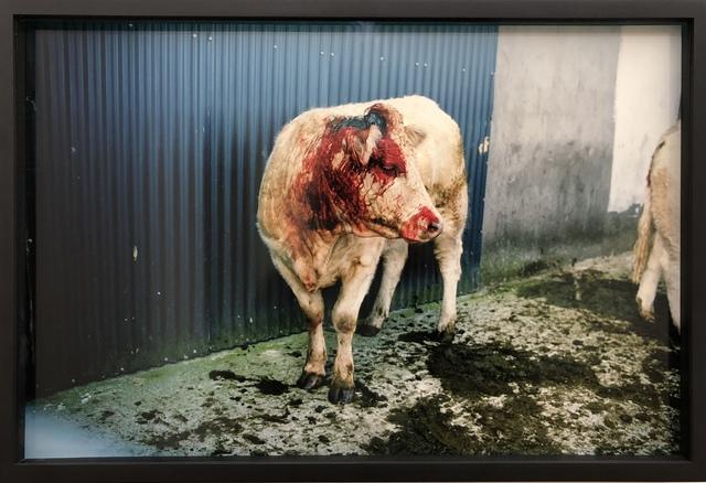 , 'Bloody Cow,' 2002, KEWENIG