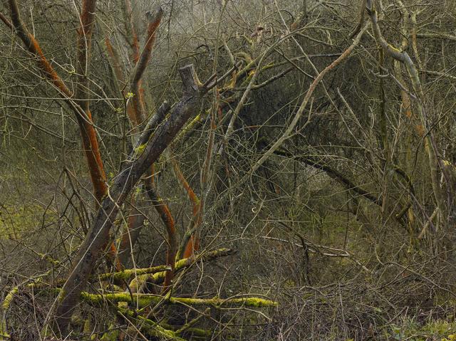 Leon Steele, 'Heath #5', 2011, Wren London