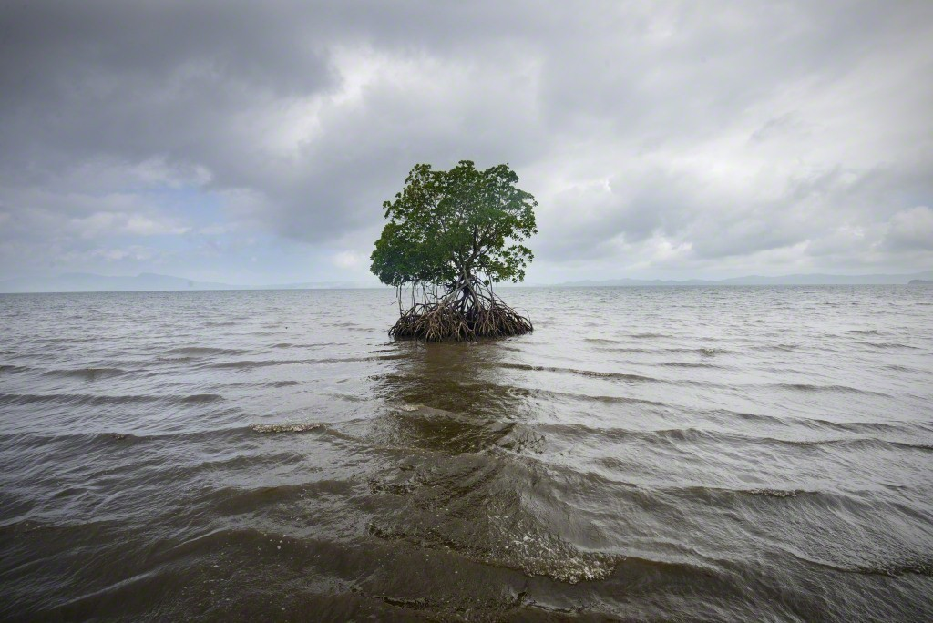 rising seas At least since 1880, the average global sea level has been rising this is due mostly to anthropogenic global warming that is driving the thermal expansion of seawater while melting land-based ice sheets and glaciers.