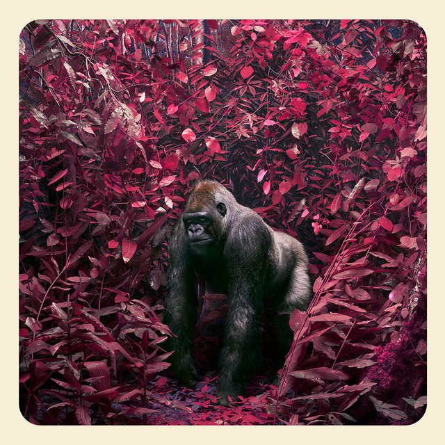 , 'Jungle Gorilla,' 2017, KLOMPCHING GALLERY