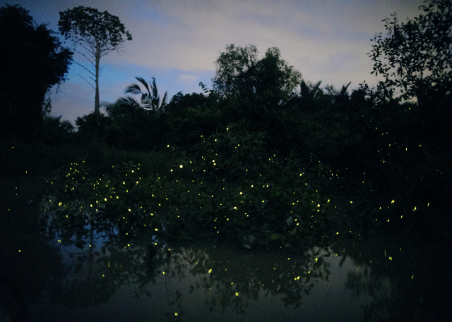 Elijah Gowin, 'Fireflies in Trees, Malaysia. From the series The Last Firefly', 2017, Tracey Morgan Gallery