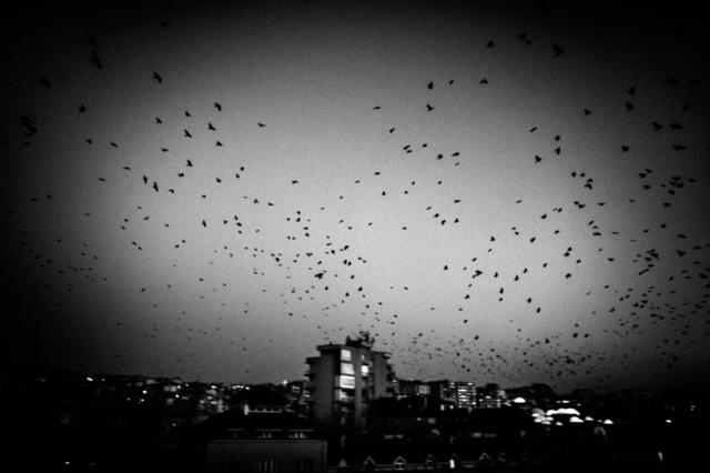 , 'Kosovo Independece,' 2008, Raffaella De Chirico